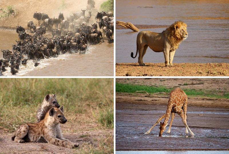 East-Africa Wildlife